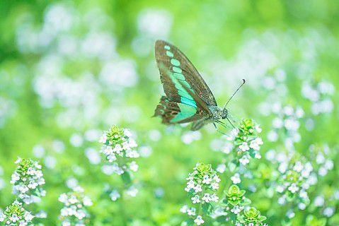 光の森テラス蝶の物語
