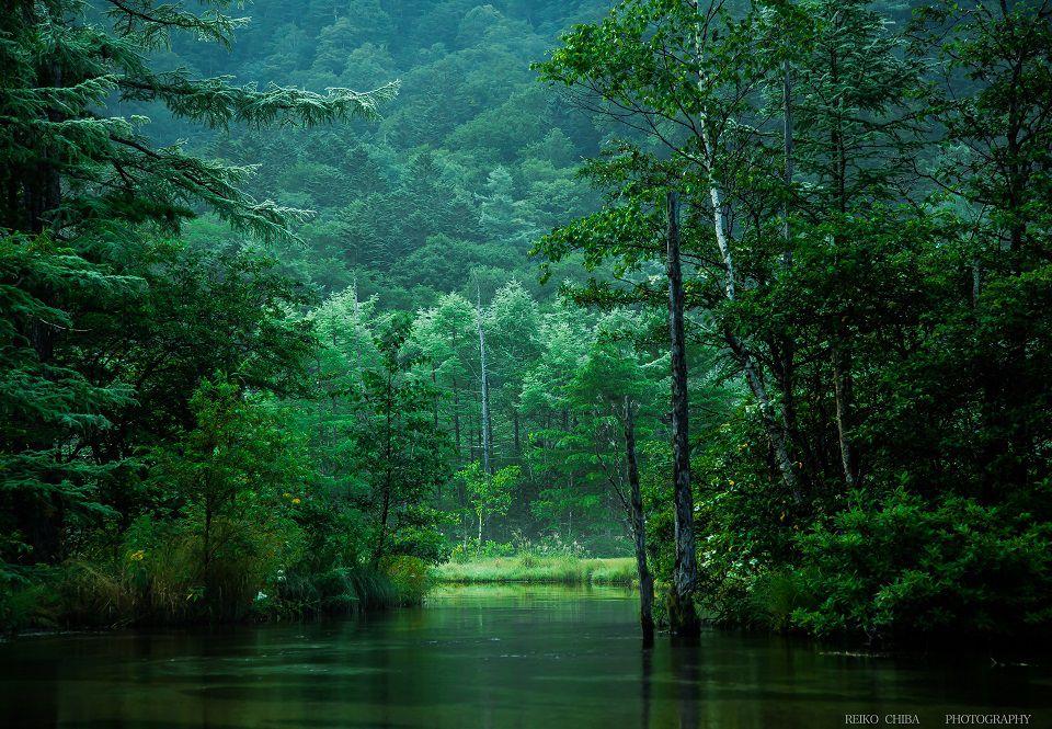 光の森テラス